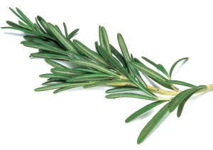 remarkable-sprig-of-rosemary-LJ7qe